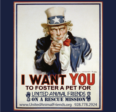 Foster ad for web